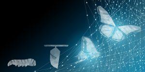 Ciclo di vita della farfalla stilizzato